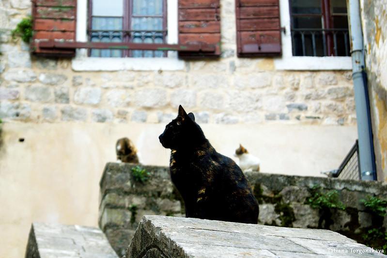 Коты на улице возле Южных ворот