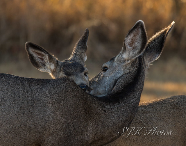 A mother's love   Explore 28/10/18, Canon EOS 6D MARK II, Sigma 150-600mm f/5-6.3 DG OS HSM | S