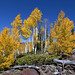 <p><a href=&quot;http://www.flickr.com/people/87836647@N05/&quot;>BDFri2012</a> posted a photo:</p>&#xA;&#xA;<p><a href=&quot;http://www.flickr.com/photos/87836647@N05/45530992432/&quot; title=&quot;Navajo Lake lava beds&quot;><img src=&quot;http://farm2.staticflickr.com/1915/45530992432_f0492cb373_m.jpg&quot; width=&quot;240&quot; height=&quot;160&quot; alt=&quot;Navajo Lake lava beds&quot; /></a></p>&#xA;&#xA;