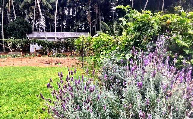 Lord Howe Island : The divine Thornleigh Farm