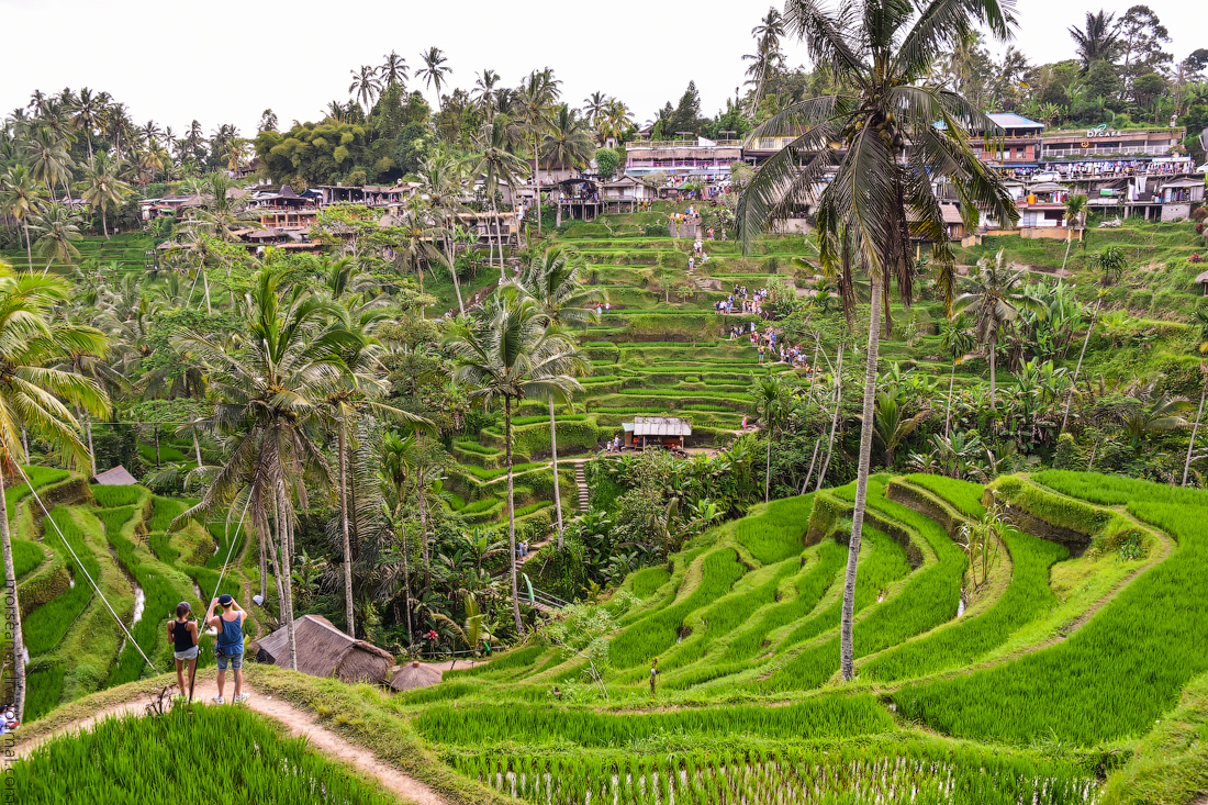 Ubud-Intertainment-(18)