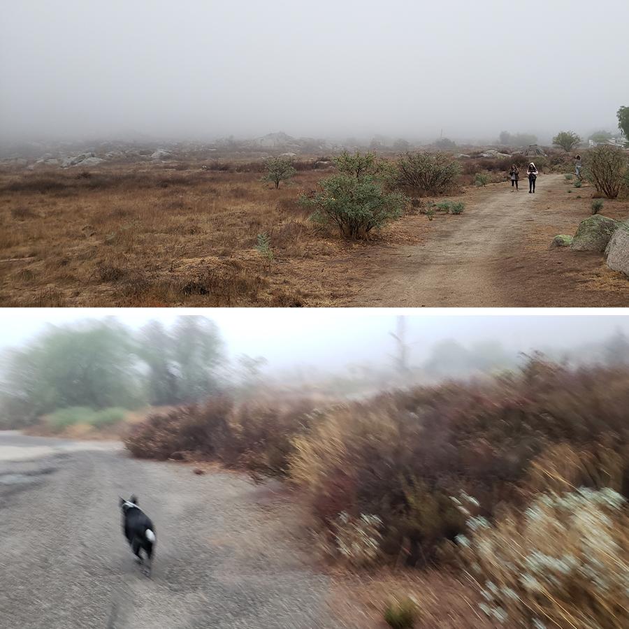 desert-misty-morning-3