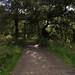 Loch Leven Path