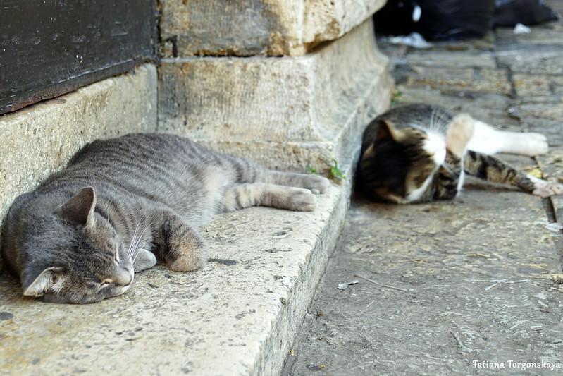 Спящий в Старом городе кот