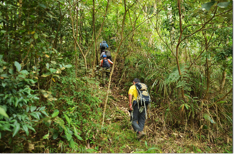 茅山登山步道 1