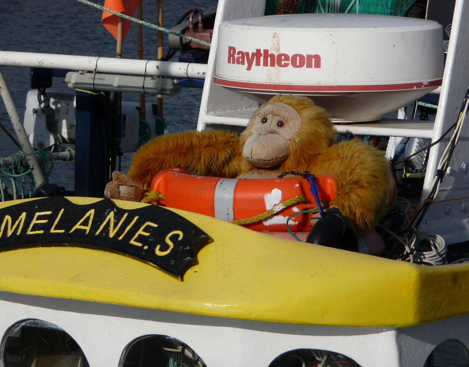Captain Orangutan, Panasonic DMC-TZ4
