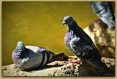 Se faire dorer le plumage au soleil - Photo of Ponteilla