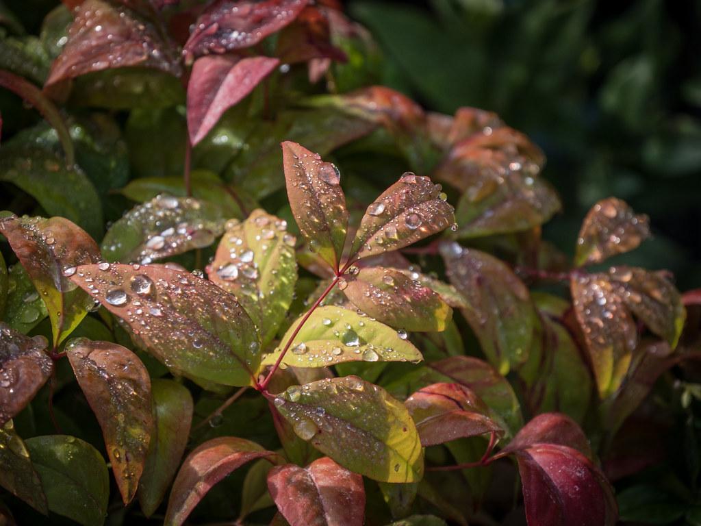 Rosée d'un matin d'automne... + recadrage 44431916994_fde91f3454_b
