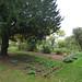 Upper Wilderness - Castle Bromwich Hall Gardens - Formal Box Hedges