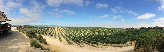 Eberle Vineyard, Paso Robles, CA