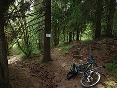 Lyng kobling - Trippestadskogen