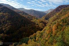 COLLE ROMICITO e FORESTA DI SAN GERBONE (Monti della Laga)