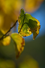Leaves in Sunlight