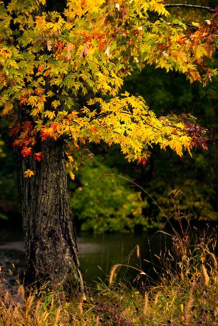 Autumn in MN, Canon EOS 5D MARK III, Tamron 70-200mm f/2.8 Di LD IF Macro