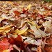Leaves on the wet ground