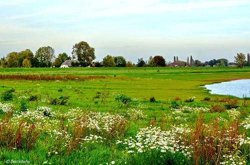 Landschaft bei Alphen an der Maas / Niederlande (1)