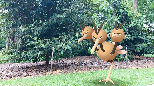 085 Dodrio (position=right)