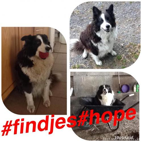 Wed, Oct 10th, 2018 Lost Female Dog - The Local Area, Ballycue Geashill, Offaly