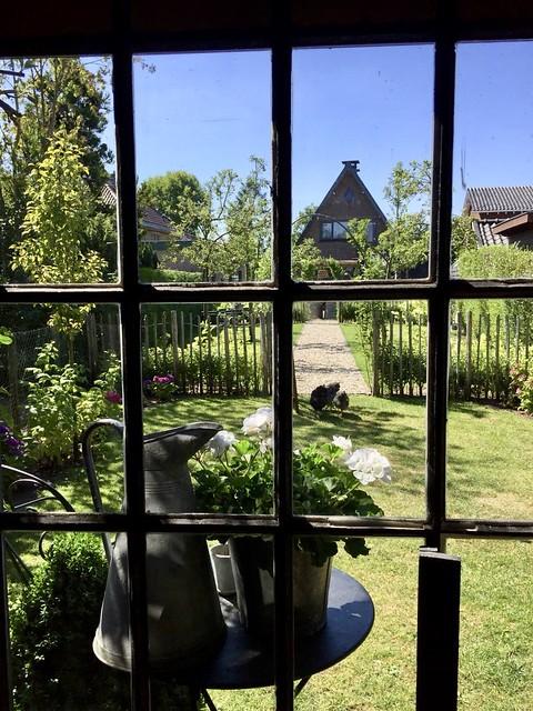 Raam met roedes landelijke tuin kippen