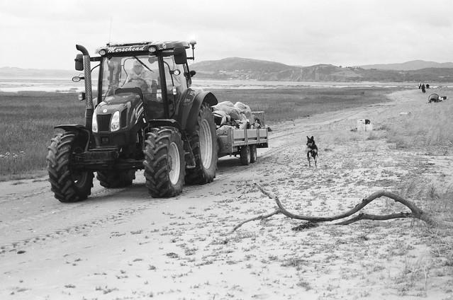 Dog v Tractor