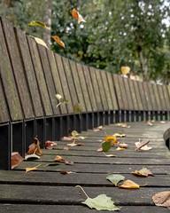 . . #autumn #urban #streetphotography #city #autumnleaves #streetstyle #cityscape #nature #urbanart #street #travel #autumncolors #streetart #instagood #citylife #fall #photography #leaves #photooftheday #cityview #autumnweather #urbanphotography #streetl