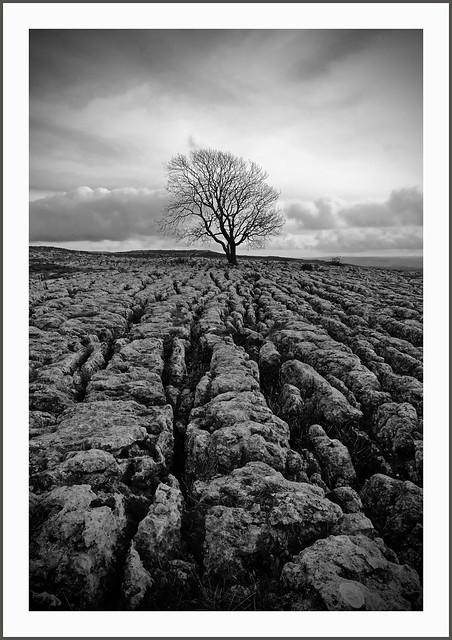 Lone Tree, Malham, Sony DSC-RX10M3, Sony 24-600mm F2.4-4.0