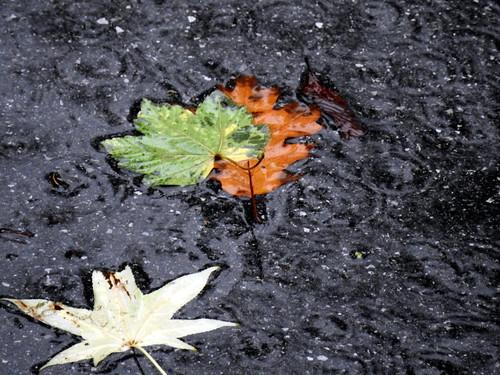 Cavenago di Brianza - Foglie e pioggia