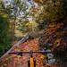 Sunday Funday Gabrielino Trail | Altadena, CA