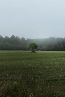 A tree in Estonia.