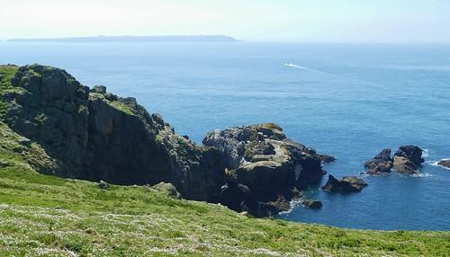 Skomer Island WT- Pembs Wales -May18 (3)