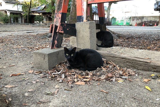 Today's Cat@2018-10-13