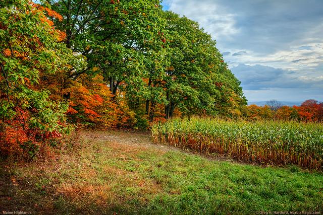 Autumn Corn Fields