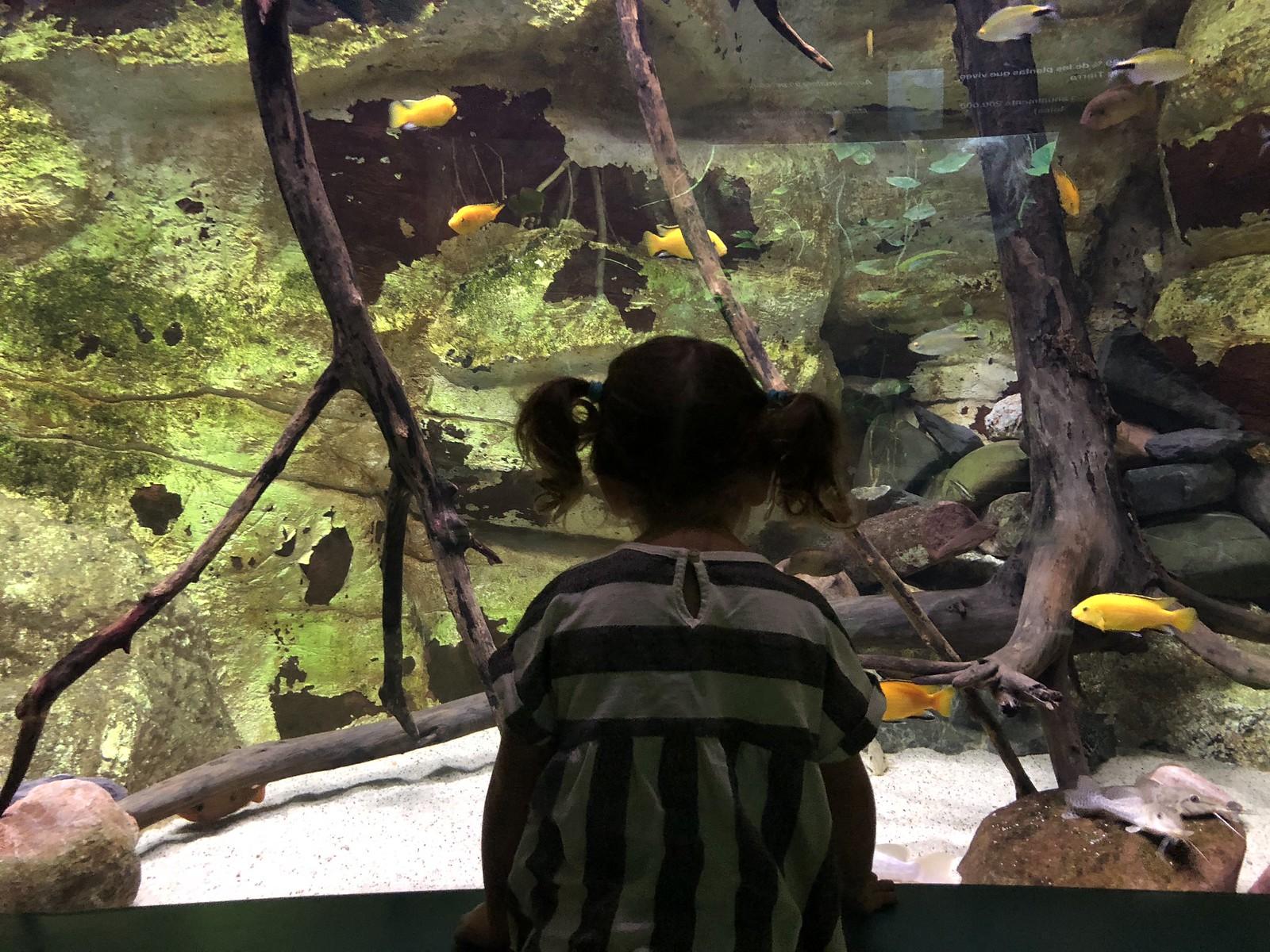 ¿A algún niño no le gustan los peces?