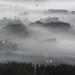 Misty Morning by Darekdarecky
