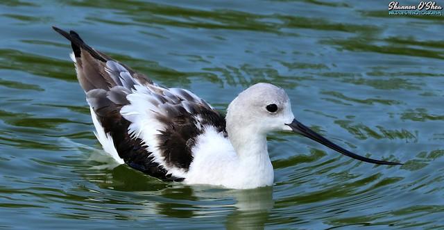 Look at the bird on that beak!