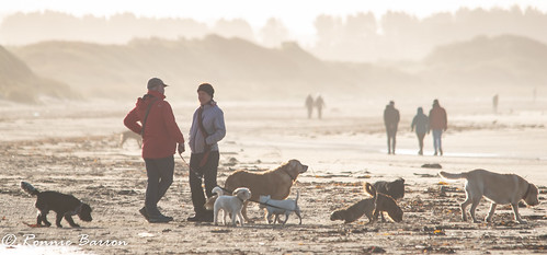 dog walkers conference
