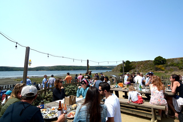 Hog Island Oyster Co. - Marshall, CA