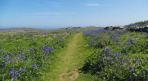 Skomer Island WT- Pembs Wales -May18 (7)