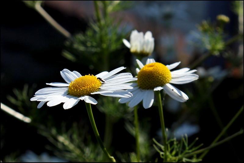 Касарги 3789 Flores