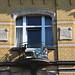 BRUXELLES - Art nouveau / Arch. Omer De Poorter (-/-)