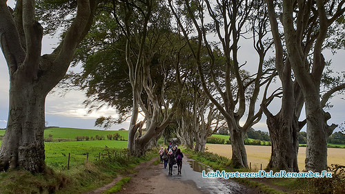 The Dark Hedges | by Lucia La Renarde