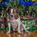 Xena Under the Tree