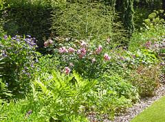 2018.06.20.081 CASTILLON - Les jardins, allée des fleurs