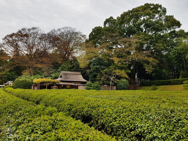 okayama korakuen autumn tea garden