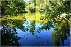 Entrelacs de branches au-dessus du lac - Photo of Ponteilla
