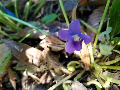 Fall Violet