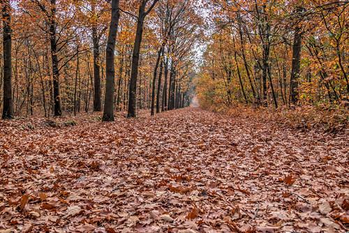 Bossen bij Bladel in de herfst
