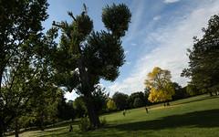 Characteful common trees