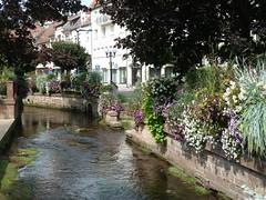 Idylle am Falkensteinerbach in Niederbronn-les-Bains - Photo of Zinswiller