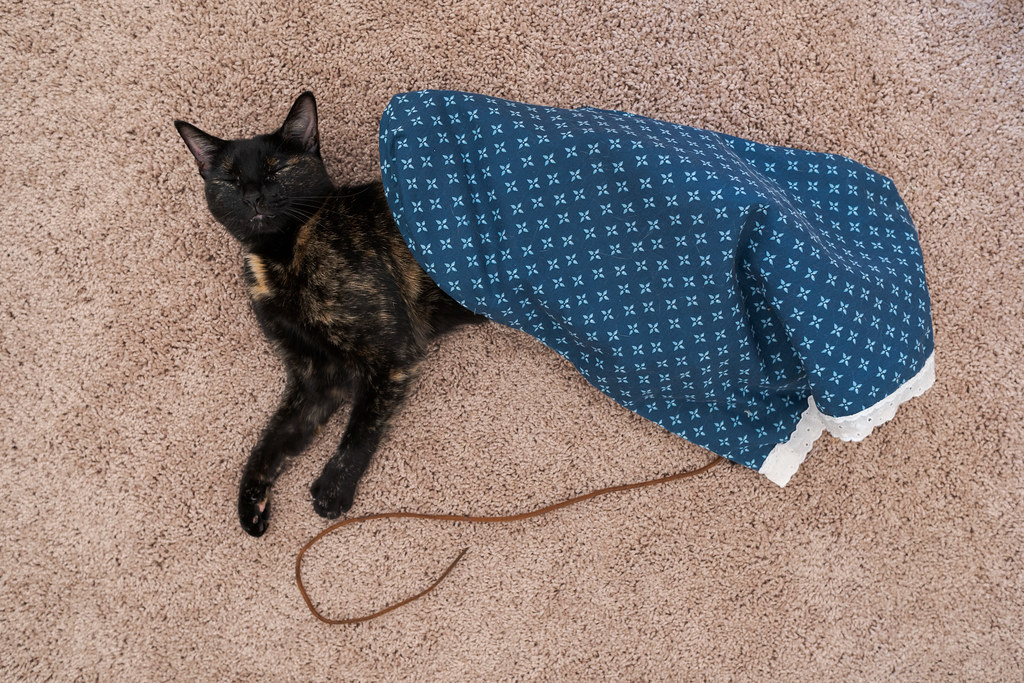 Our cat Trixie sleeps on the carpet underneath the crinkle bag and next to one of her shoestrings